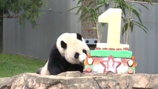 National Zoo in Washington Throws  Birthday Party for Giant Panda Bei Bei