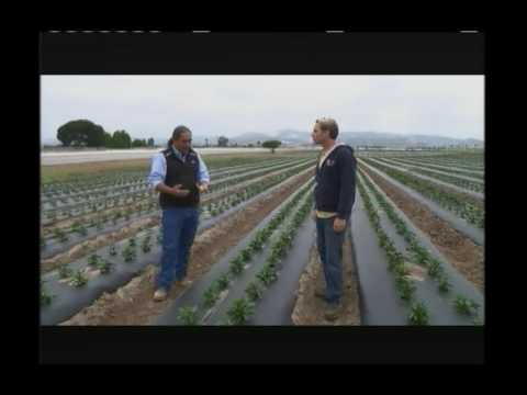 Curiosity Quest Organic Farming