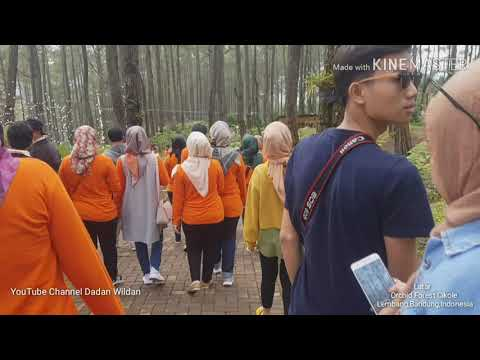 wisata-orchid-forest-cikole-dengan-spesies-angrek-dan-track-selfi-lembang-bandung-indonesia
