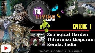 The Living Lens - Video Series Episode 1 - Thiruvananthapuram Zoo, Kerala By Jithin Vijayan