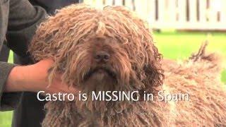 Castro - Valentisimo's Castro 2012-2016 - Spanish Water Dog