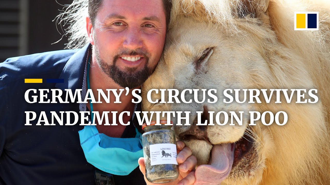Circus in Germany survives during the Covid-19 pandemic by turning lion poo into 'gold'