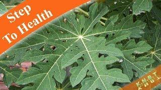 13 Benefits of Papaya Leaves
