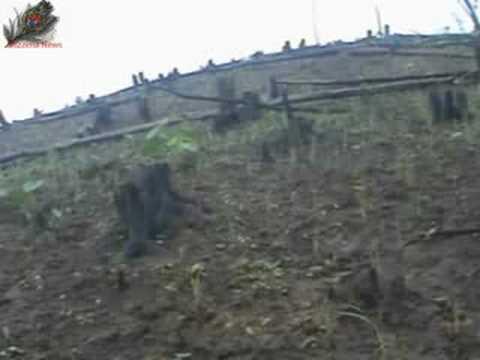 Locusts destroy crop in Manipur