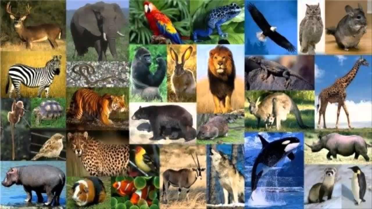 Mas De 22 Mil Especies De Animales En Peligro De Extincion Segun ...