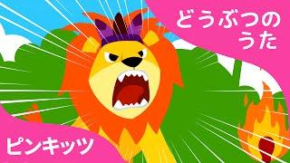 ライオン | シシのうた | どうぶつのうた | ピンキッツ童謡