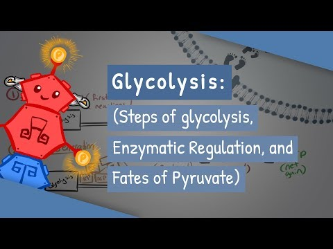 Glycolysis (Steps of glycolysis, Enzymatic Regulation, and Fates of Pyruvate)