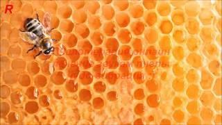 Пчелотерапия онлаин (вибрации звуков пчелы) пасека(Апитерапия или пчелотерапия онлайн для тех у кого нету своей пасеки, основная задача снять мигрень или..., 2016-07-14T09:00:01.000Z)