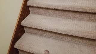 SEPR Papi Stairs
