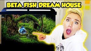 MAKING MY BETA FISH HIS DREAM HOME