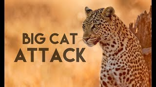 HORSE ATTACKED BY BIG CAT @ Gympie, QLD    PantherPeople