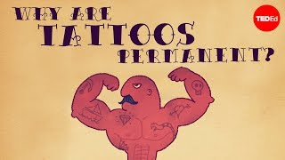 Repeat youtube video What makes tattoos permanent? - Claudia Aguirre
