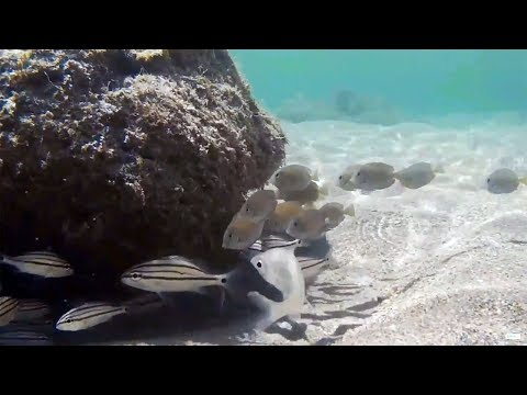 Snorkeling Bathtub Reef Beach, Stuart Florida 🐟 Underwater Video 🐟