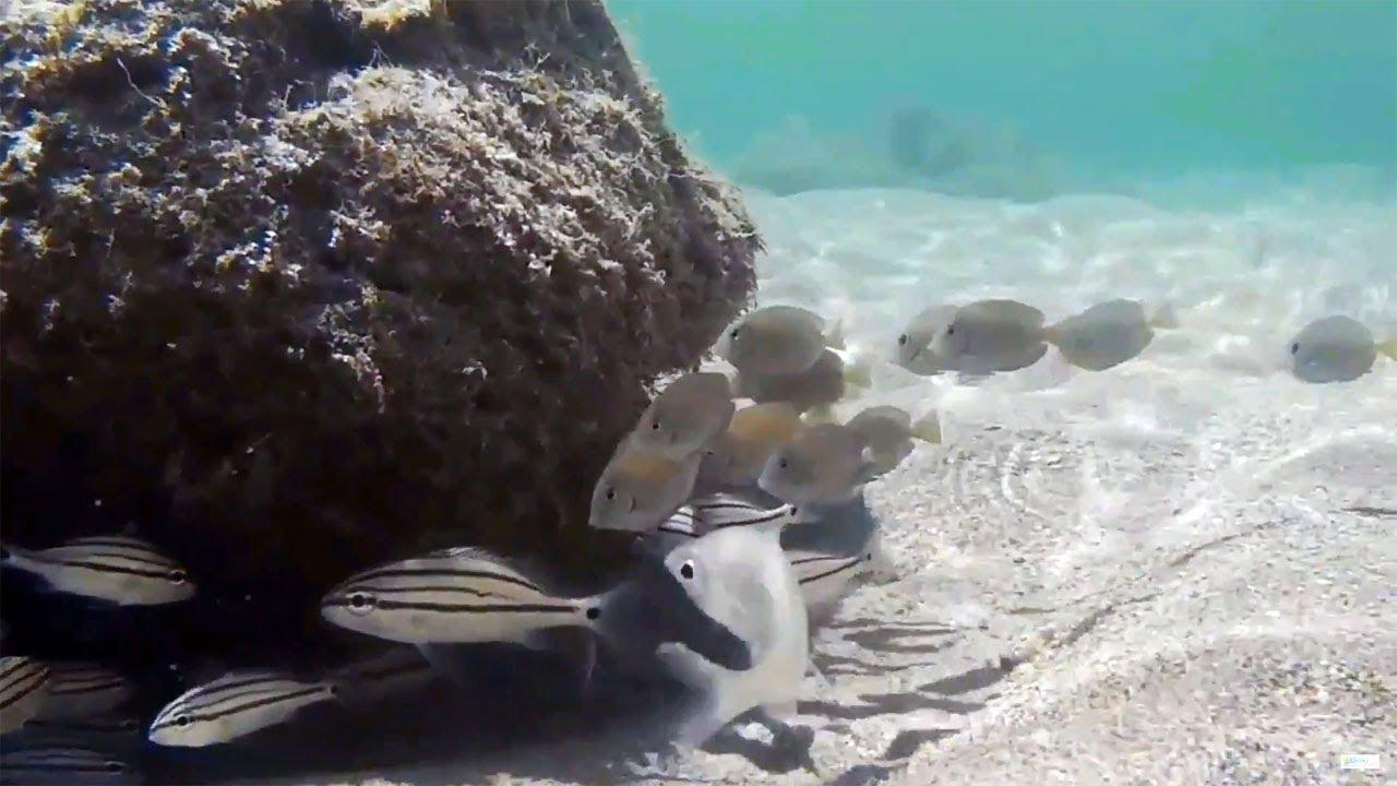 Snorkeling Bathtub Reef Beach Stuart Florida Underwater