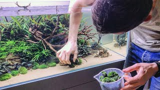 Aquascaping MASTERCLASS - Why details matter