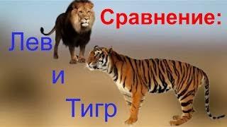 Сравнение: Цари зверей. Тигр и Лев. Кто круче? . Gwadawa