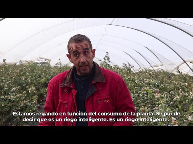 ¿Cómo optimizamos el agua de riego en el Condado de Huelva?
