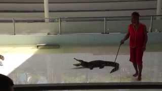 Crocodile farm show. Phuket. Part 1. Шоу крокодилов. Пхукет. Часть 1.
