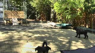 Outside Dog Yard Cam 09-19-2018 09:30:28 - 10:30:29