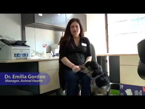 Tip Tuesdays: General Dog Care