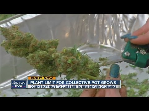 Denver to limit noncommercial pot-growing operations to 36 plants