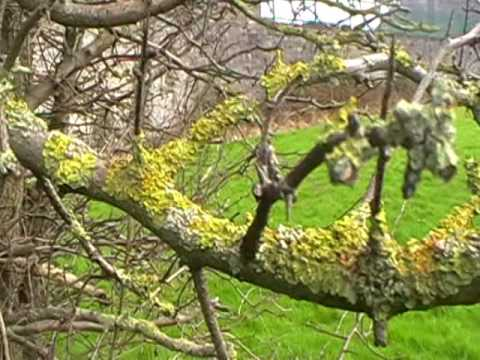 Trees are sick even, from Jet spraying;Ireland.