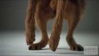 pedigree dogs ad shot 1000 fps using the phantom camera