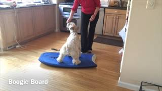 Canines Can Do  Intermediate Tricks