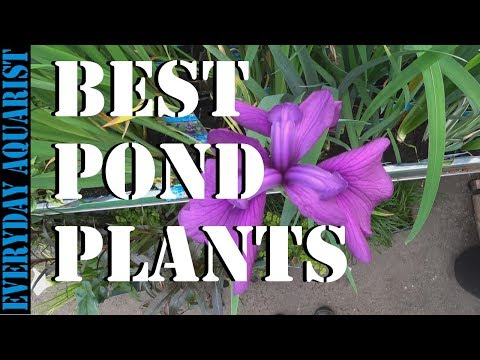 Best Pond Plants To Reduce Algae And Clear Green Water