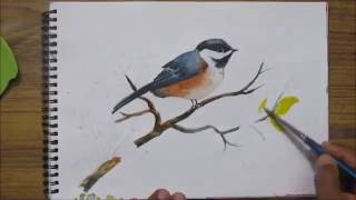 How to paint a bird in watercolor,watercolor painting for beginners