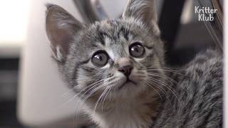Employees Might Get Fired Because Of This Innocent Looking Kitten, Because.. | Kritter Klub