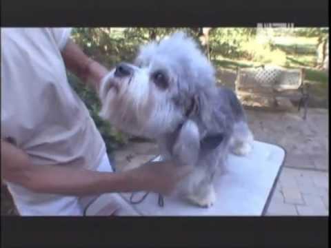 ABC CANINO - DANDIE DINMONT TERRIER - 101 DOGS ESPAÑOL