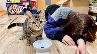 子猫にご飯をあげる瞬間に死んだフリをしてみた結果w