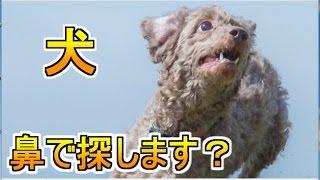 【かくれんぼ】まるで犬のように鼻で探します?【GMOD実況】14