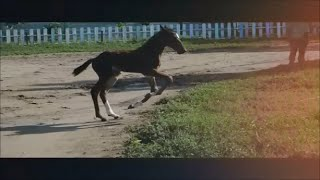 Будни конного клуба