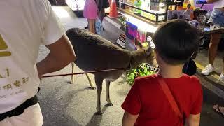 야시장에서 만난 꽃사슴