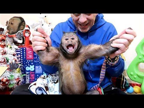 Monkey Christmas Mail!