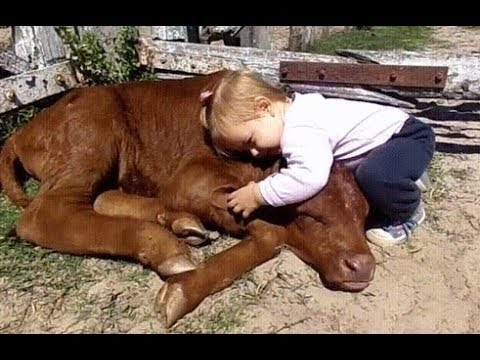 Baby 👶 Befriends with 🐄 Cow Cute Babies and Pets Compilation