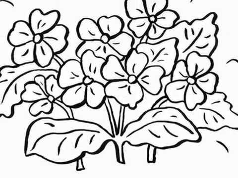Ausmalbilder Blumen Blumen Vorlagen Zum Ausschneiden