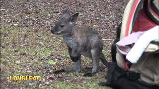 Wallaby Baby Rescued By Keepers