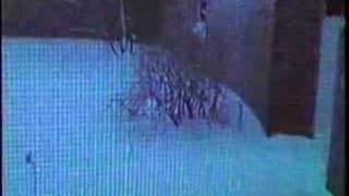 New York Snowstorm, February 11, 1983
