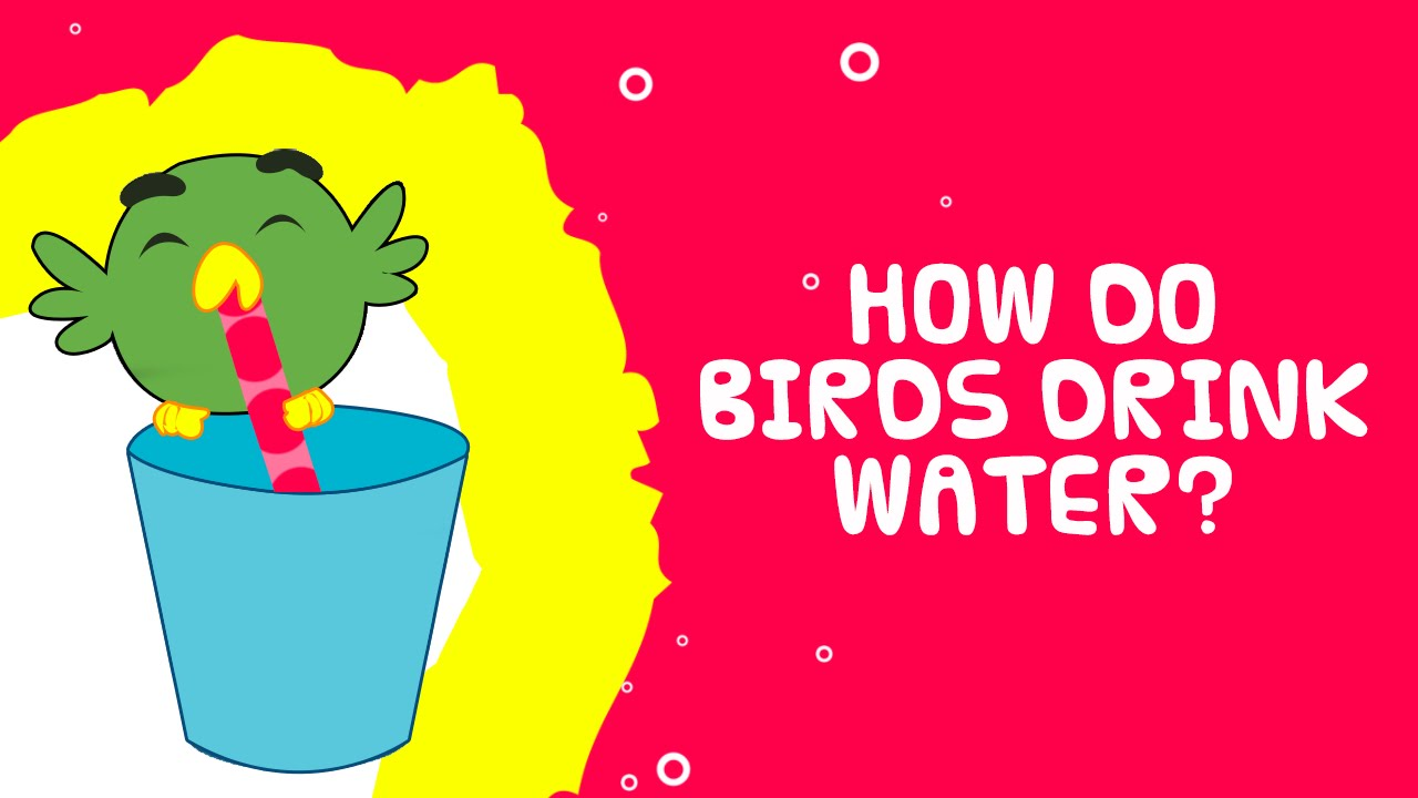 how do birds drink water science facts for kids youtube