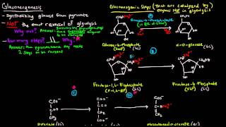 Gluconeogenesis (Part 1 of 3) - Intro and Steps
