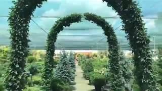 Огляд садових центрів. Інтерфлора Україна