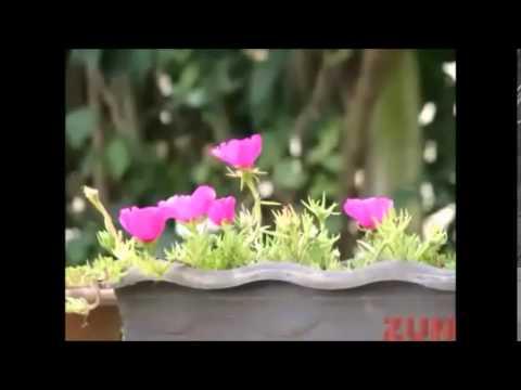 Flores que gostam de muito Sol