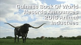 Guiness Book of World Records 2016 Animal Inductees