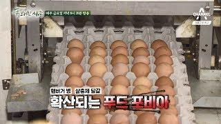 [상시 예고] 햄버거 병·살충제 달걀, 확산되는 푸드포비아 속 안전한 먹거리를 찾아서 thumbnail