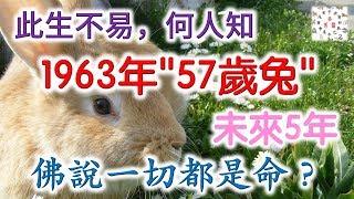 """【此生不易,何人知】1963年""""57歲兔""""的未來5年,佛說一切都是命?"""