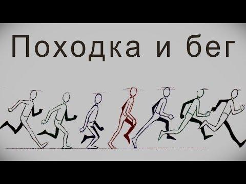 Законы Анимации: Походка и Бег. Принципы и порядок создания фаз анимации