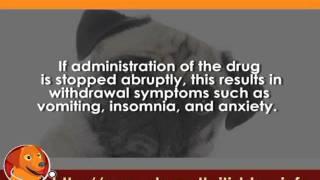 Prescription Painkillers for Dog Arthritis User Guides Part 5   Codeine